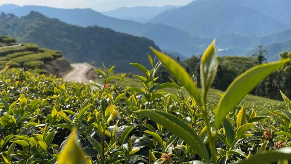 台灣茶葉資訊中心